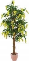 Goldregenbaum gelb 180 cm
