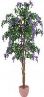 Goldregenbaum violett 180 cm