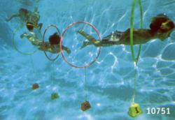 Flipper Tauchspiel - 4er Set